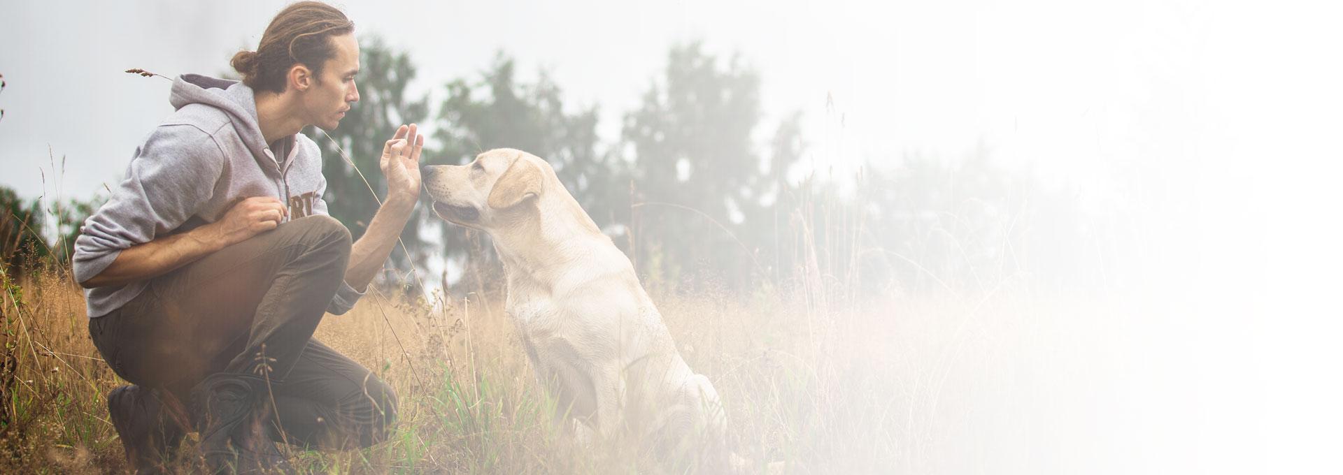 les clés dressage canin